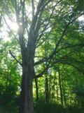Baldacchino di albero fotografia stock libera da diritti