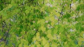 Baldacchino verde Fotografia Stock Libera da Diritti