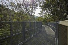 Baldachimów spacery z słońcem migoczą przy królowej sirikit ogródem botanicznym Zdjęcia Stock