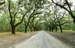 Baldachim dębowi drzewa zakrywający w mech Forsyth park, sawanna, Geo Obrazy Royalty Free