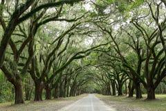 Baldachim dębowi drzewa zakrywający w mech Wyspa nadzieja, Obrazy Royalty Free