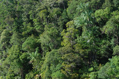 baldachim dżungli Zdjęcia Royalty Free