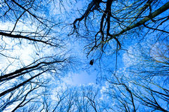 baldachimu drzewo obrazy stock