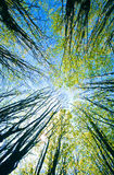 baldachimu drzewo zdjęcie stock