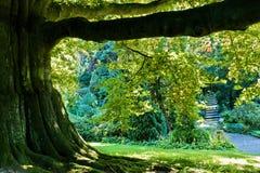 baldachimu drzewo fotografia royalty free