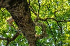 Baldachimu drzewo w lesie zdjęcie stock
