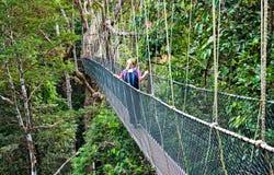 Baldachimu przejście Borneo fotografia royalty free