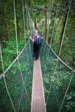 Baldachimu przejście Borneo obrazy royalty free