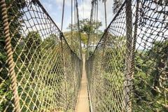 Baldachimu przejście w Kakum parku narodowym, Ghana, afryka zachodnia Obraz Royalty Free