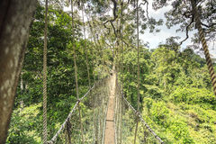 Baldachimu przejście w Kakum parku narodowym, Ghana, afryka zachodnia Zdjęcia Stock
