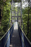 Baldachimu spacer Przez tropikalnego lasu deszczowego Zdjęcia Royalty Free