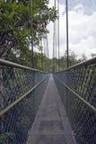 Baldachimu spacer Przez tropikalnego lasu deszczowego Zdjęcia Stock
