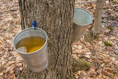 Balde usado para recolher a seiva de árvores de bordo fotografia de stock