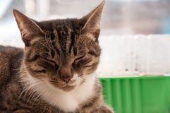 Baldeet bonito do gato na janela imagens de stock