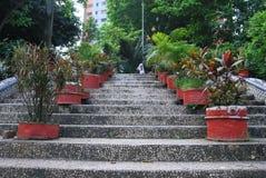 Baldha庭院是其中一个最旧的植物园在孟加拉国 庭院丰富与罕见的植物种类收集从 库存照片