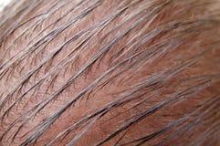 balding стоковое изображение rf