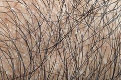 Balding Stock Image