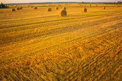 Bale сена в поле под голубым небом Стоковое Фото
