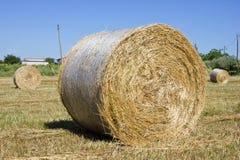 Bale сена Стоковые Фотографии RF