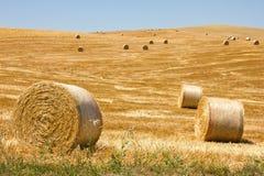 Bale сена Стоковое Фото