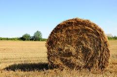 bale тюкует лето сторновки лужка сена поля Стоковые Изображения RF