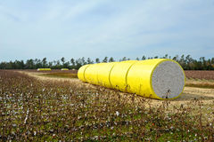 Bale of Cotton Royalty Free Stock Images