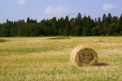 A  bale in the field. Stock Photos
