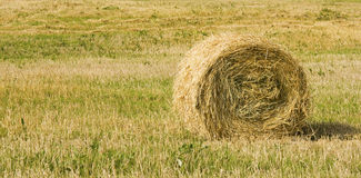 A  bale in the field. A yellow bale in the field Royalty Free Stock Images