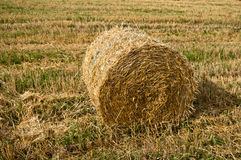 Bale on a field. In late summer Stock Images