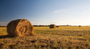 Bale field Stock Photos