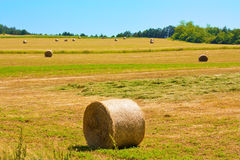Bale field. Several bales on a field on a beautiful sunny day with blue sky Stock Image
