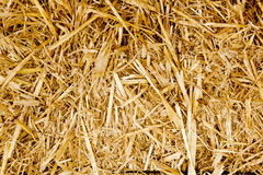 Bale golden straw texture ruminants animal food Royalty Free Stock Photos