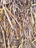 Bale grass (background) Stock Photo