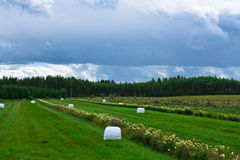 Bale of hale. Hey bales on a field at cloudy day Stock Photography
