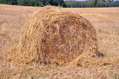 Bale of hay Stock Photography