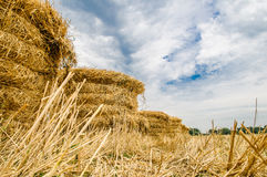 A bale of hay Royalty Free Stock Photo
