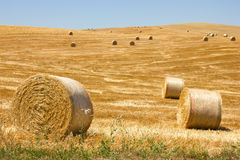 Bale of Hay. Hay Bale Scenery, summer day Stock Photo