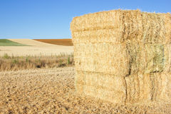 Bale of Hay. Hay Bale Scenery, summer day Stock Images