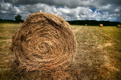 Bale of hay Stock Images