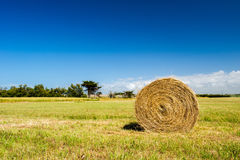 Bale hay in agriculture landscape Stock Photos