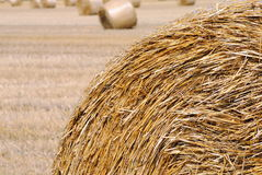 Bale of hay in the countryside. Bale of hay of wheat field in the countryside Royalty Free Stock Photos