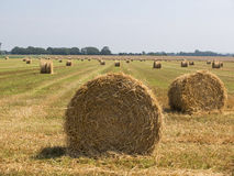 Bale of hay on cultivated field. Blue sky in the background Royalty Free Stock Photo