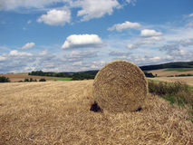 Bale of hay. On a field Royalty Free Stock Photography