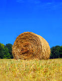 Bale of Hay in field. Round bale of hay in field in front of trees and a clear blue sky royalty free stock photos