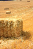 Bale of hay in a field Royalty Free Stock Photos