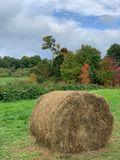 Hay bale with a fall background royalty free stock image