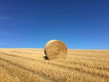 Bale of hay in field Stock Photography