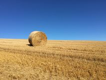 Bale of hay in field Royalty Free Stock Image