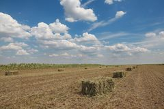 Bale of hay in field. Packed bale of hay in field with beautiful blue sky and clouds, early summer Royalty Free Stock Photos
