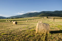 Bale of hay on field Stock Images